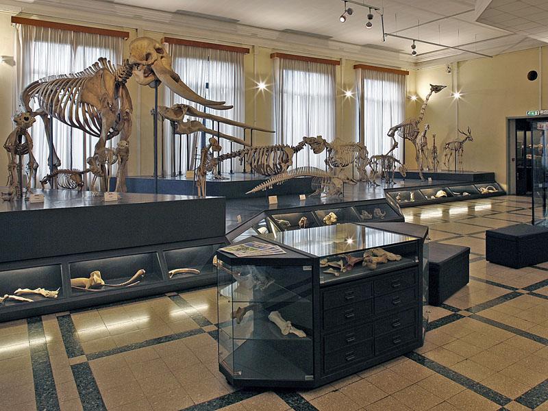 museo-zoologia